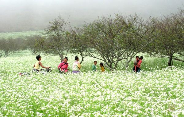 Tour ghép Mộc Châu mùa hoa cải 2 ngày 1 đêm